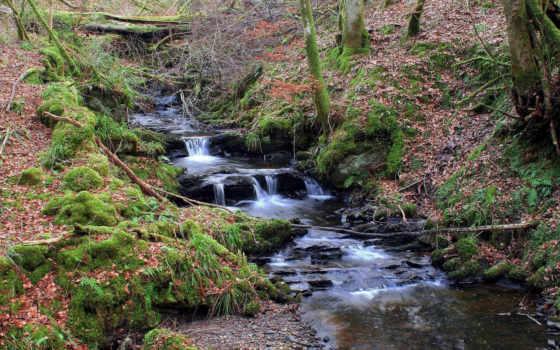 ручей, les, лесу, камни, деревя, мох,