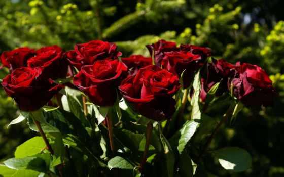 rosales, los, mundo, que, más, rosas, mas, ferrolan, las,