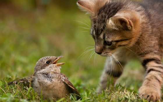 птицы, кошки, кот, птица, природа, котенок, zhivotnye, instinct, картинка, hunting,