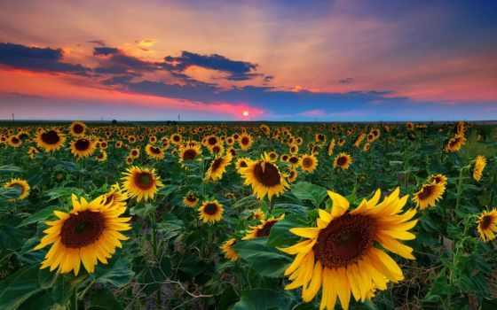 природа, поле, ukraine, подсолнух, облако