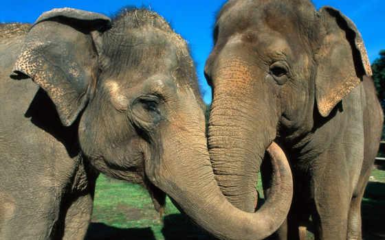 животные, животных, love