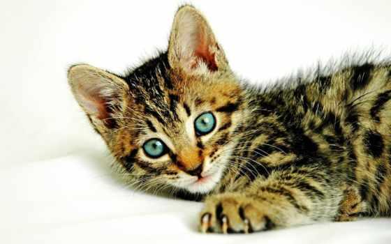gatos, gatitos, fotos