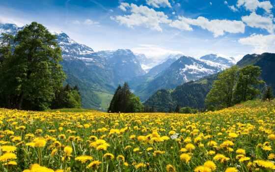 телефон, горы, красивые, одуванчики, цветы, альпы, android, самые, природа, заставки, пейзажи -,