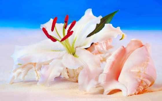 seashell, browse,