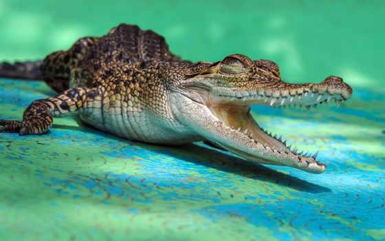 reptiles, animal, cheap, crocodiles, animales, плакат, крокодил, aliexpress, por, вид, медведь,