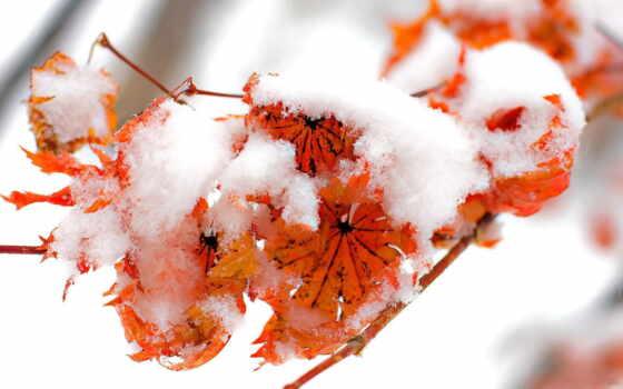 листва, winter, снег, снегу, осенние, природа, желтые, осень, branch, шарф,
