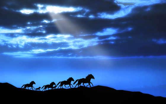 закат, fone, силуэты, заката, лошадей, trees, sun, закате, алеющего, приколы, закатом,