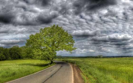 дорога, поле, асфальтная, зеленые, колоски, дерево, фоны,