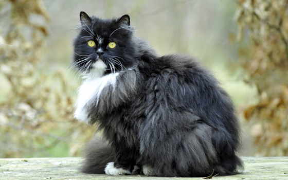 кот, cats, масть, officialapocaly, pinterest, pictures, furry,