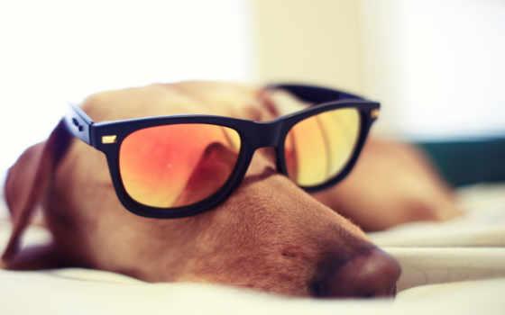 очки, монна, чтоб, кот, собака, очках, лайков, дизлайков,