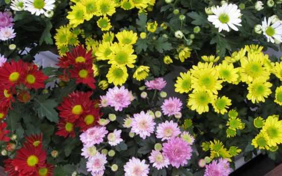 cvety, цветов, подарков