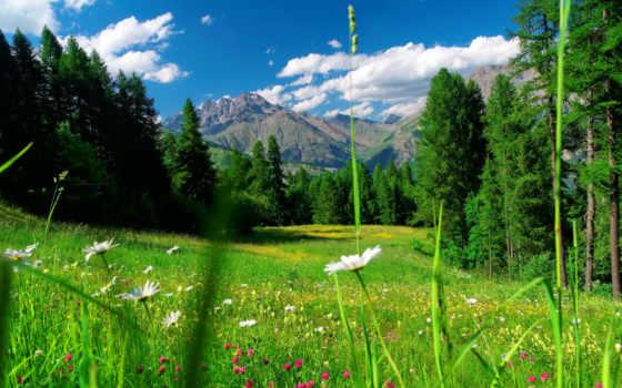 fleurs, montagne, des