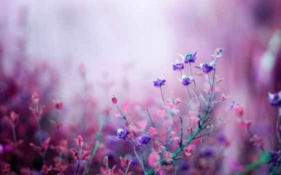 цветы, полевые, wildflowers, flowers, кем, загружено, просить, метки, purple, природа, jacqueline,