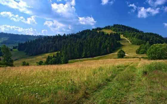 campo, paisaje, природа