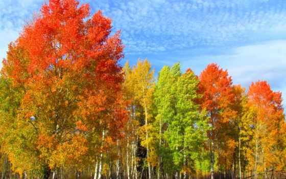 trees, осень, изображение, природа, береза, forests, краски, календарь,