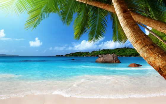 пальмы, firestock, интерьере, моря, чёрно, пляж, растровый, palms, клипарт, фотообои, вариантах,