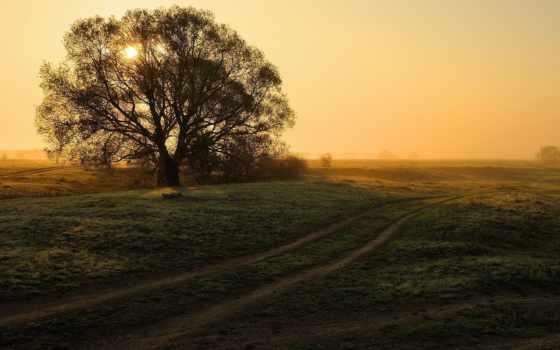 дерево, закат, fone, windows, seven, категории, лес, небо,