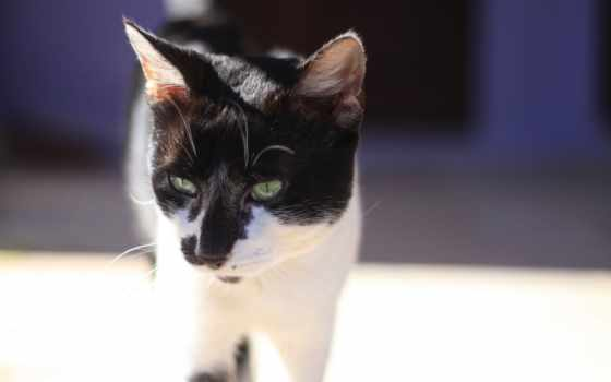 кот, goodfon, кошак, взгляд, eyes, kotyara, свет, tomcat, смотреть,