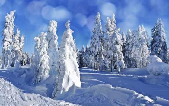 winter, елки, снег, eli, лес, природа, сугробы, небо,