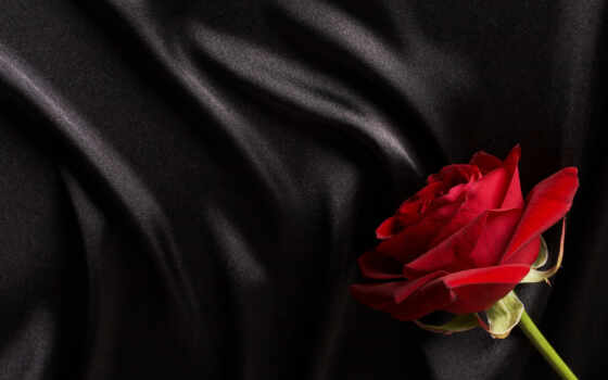 роза, black, fone, шелк, розы, red, сатин, красная, черном, макро, цветы,