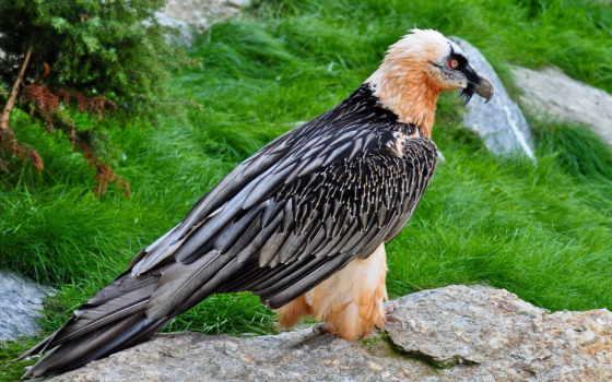 красивые, птица, перья, телефон, регистрации, лапы, tail, клюв, установить,