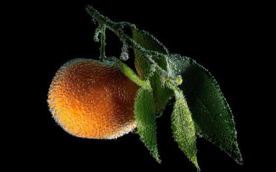 оранжевый, фрукты, mandarin, макро, качественные, ягоды, года, водой, абстракция, предпросмотром, мандарины,