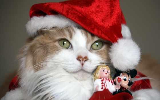 новый год, кот, шапка, два, котенок, animal, дед, иней, christmas