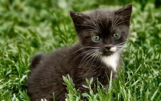 котенок, смотреть, трава