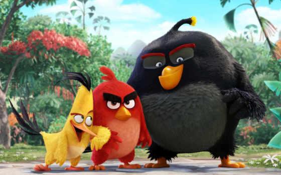 birds, angry, movie Фон № 119729 разрешение 2560x1440