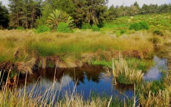 выпуск, лес, rar, природы, завораживающие, ландшафты, bouskoura,