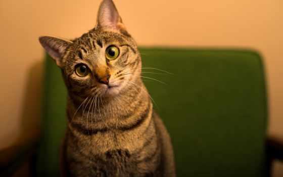 кот, удивление, case, кота, морда, iphone, ус, котенок, купить, тюлень,