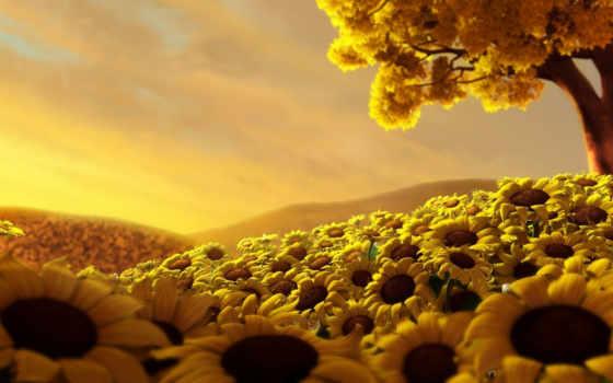 подсолнухи, подсолнухов, поле, cvety, цветов,