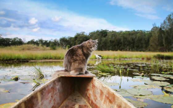 кот, лодка, рыбачок, природа, осень, морда, animal, ноябрь, взгляд