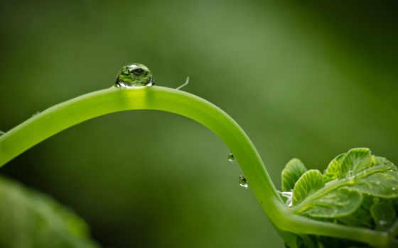 макро, зелень