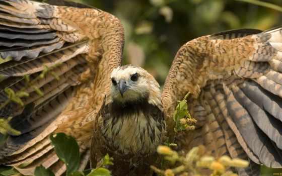 животные, природа, птицы