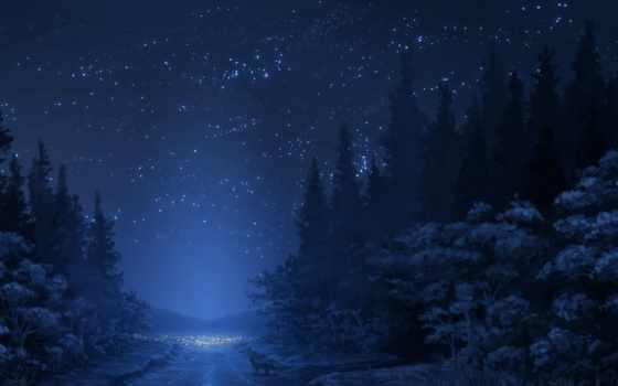 лес, ночь, ratio
