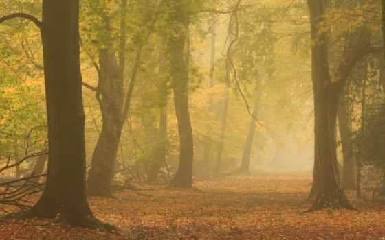 mist, осень, лес