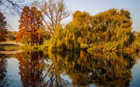 осень, деревя, park, пруд,