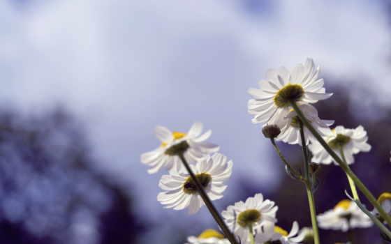 Цветы 100117