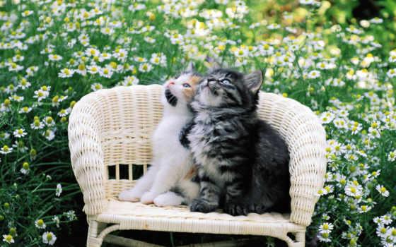 кот, котенок, киска, pussycat, котэ, цветы,