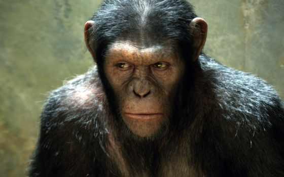 обезьяна, обезьян, планеты