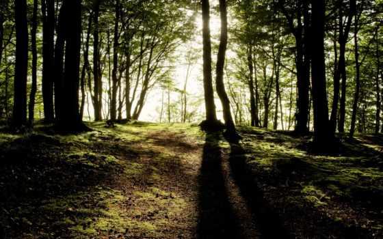 trees, лес, sun, сквозь, природа, desktop, shining, see,
