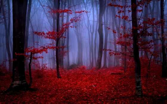 лес, foggy, осень, листва, red, природа,