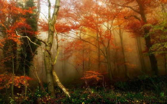ди, autunno, природы, del, bosco, мгновения, застывшие, февр, foglie, natura,
