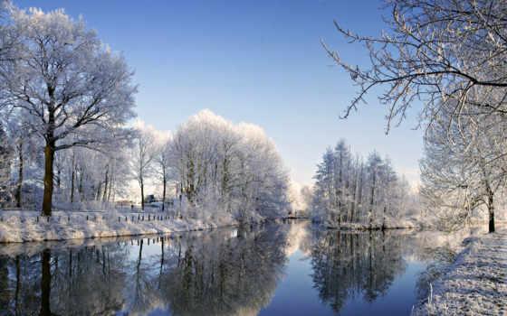 снег, trees, winter