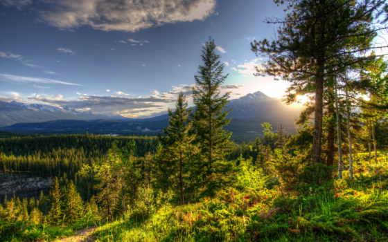 лес, коллекциях, яndex, посмотрите, коллекцию, природа,