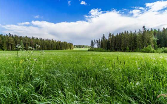 поле, лес, небо