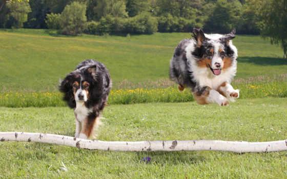 собака, dogs, фото