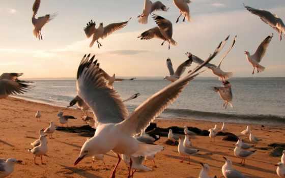 seagulls, чайки, seagull, this,