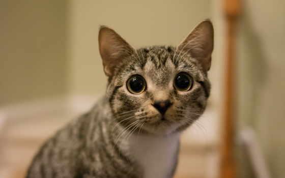 кошки, смотреть, rina, мацуки,
